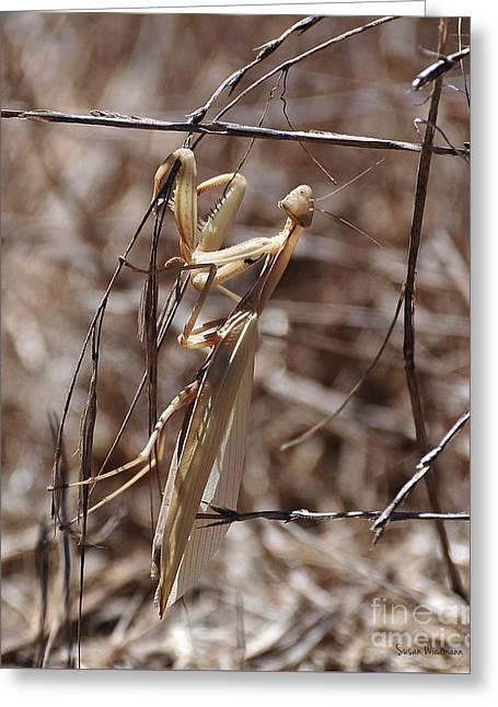 Praying Mantis Blending In Greeting Card