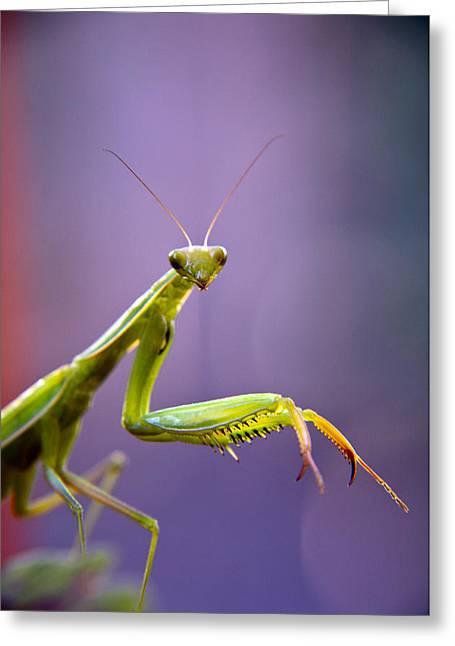 Praying Mantis  Greeting Card by Eric Rundle