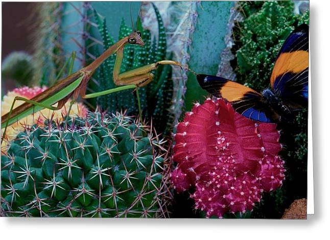 Praying Mantis  Hunting For Prey Greeting Card by Leslie Crotty