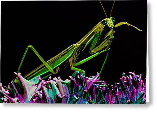Macro Closeup Of The Chinese Mantis Walking On A Cactus Plant Greeting Card by Leslie Crotty