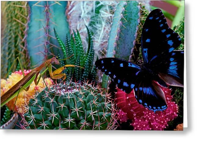 Praying Mantis  Predator And Prey Greeting Card by Leslie Crotty