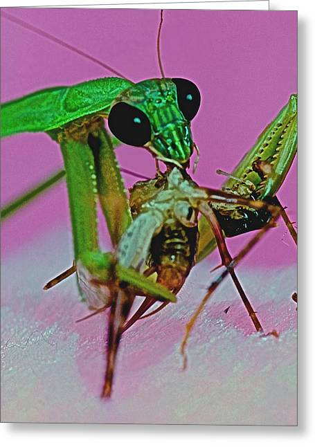 Praying Mantis  Predator Of Insects  2 Of 2 Greeting Card by Leslie Crotty