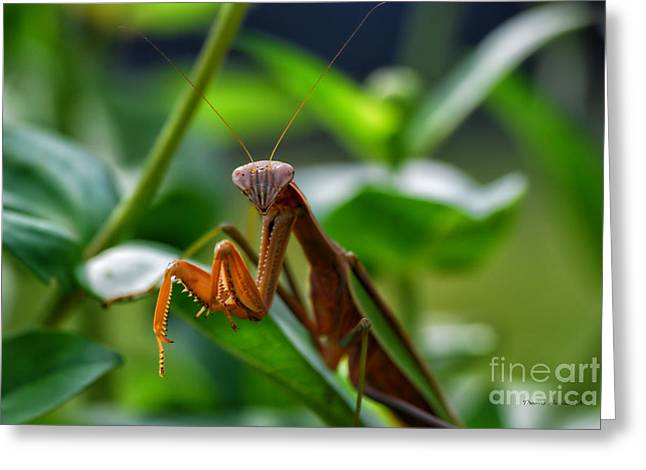 Greeting Card featuring the photograph Praying Mantis by Thomas Woolworth