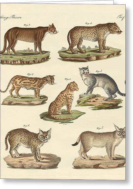 Predators From All Parts Of The World Greeting Card by Splendid Art Prints