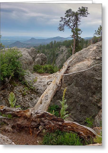 Black Hills Vista Greeting Card