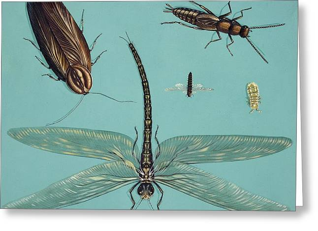 Prehistoric Insects Greeting Card