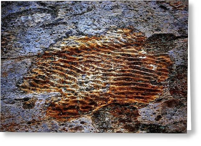Prehistoric Sea Floor Greeting Card