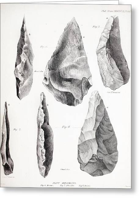 Prehistoric Stone Tools Greeting Card by Paul D Stewart