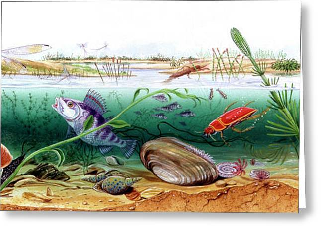 Prehistoric Watertight Ecosystem Greeting Card
