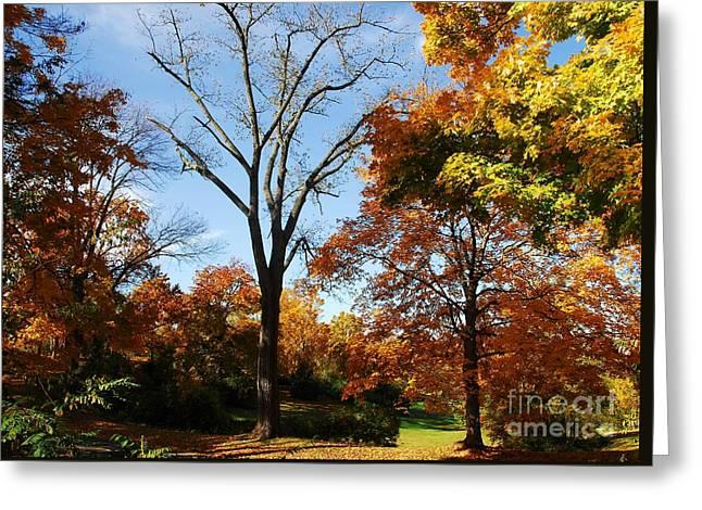 Premature Leaf Termination Greeting Card by Mel Steinhauer