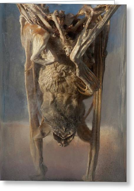 Preserved Panama Bat In Museum Jar Greeting Card