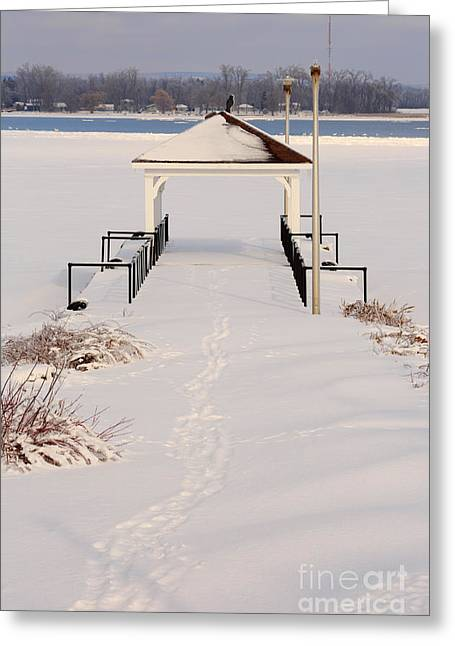 Presquile Provincial Park In Winter Greeting Card by Louise Heusinkveld
