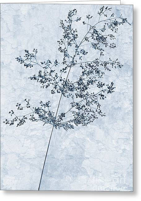 Pressed Grass Cyanotype Greeting Card by John Edwards