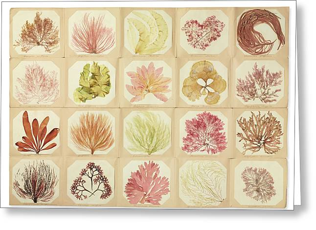 Pressed Seaweed Book Greeting Card