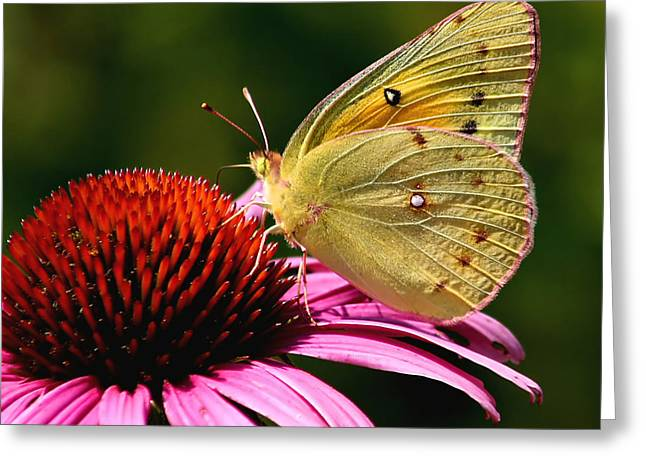 Pretty As A Butterfly Greeting Card