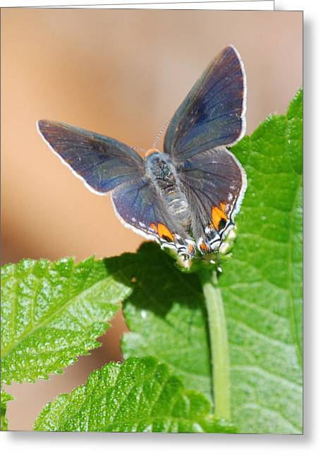 Pretty As A Flower Greeting Card by Kathy Gibbons