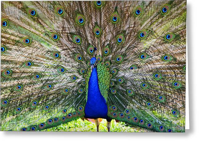 Pretty As A Peacock Greeting Card by Tony  Colvin