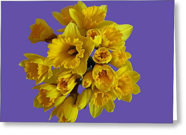 Pretty Daffodils Greeting Card by Christopher Rowlands
