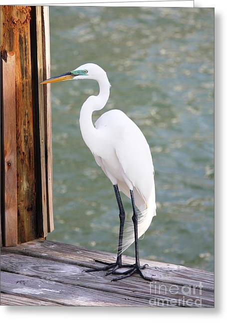 Pretty Great Egret Greeting Card