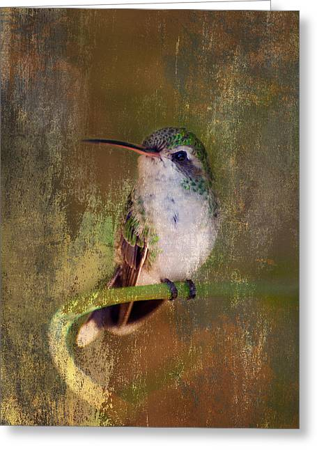 Pretty Hummer Greeting Card