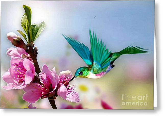 Pretty Hummingbird Greeting Card by Morag Bates