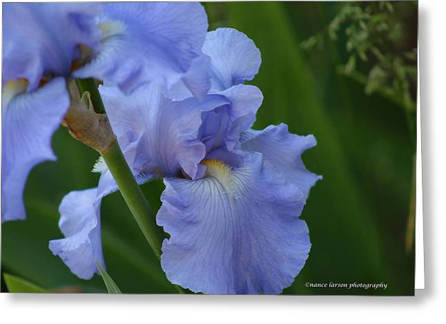 Pretty In Blue Greeting Card by Nance Larson