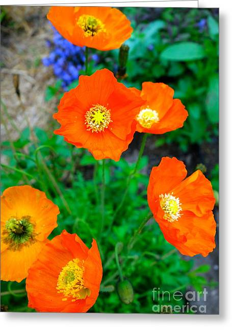 Pretty In Orange Greeting Card