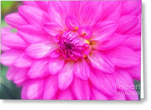 Pretty In Pink Dahlia Greeting Card