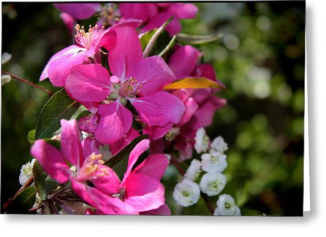 Pretty In Pink II Greeting Card by Aya Murrells