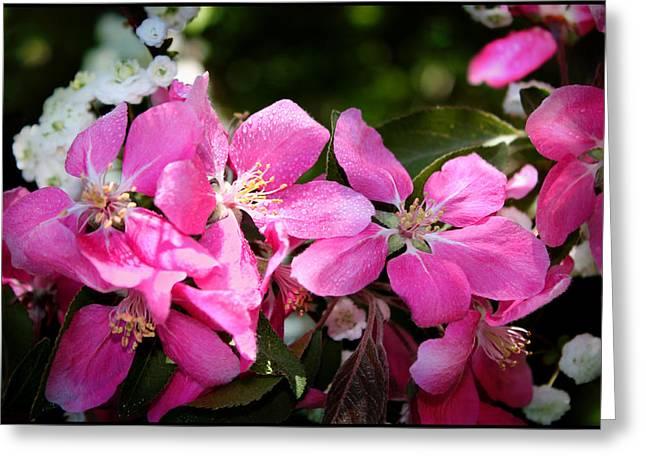 Pretty In Pink Iv Greeting Card by Aya Murrells