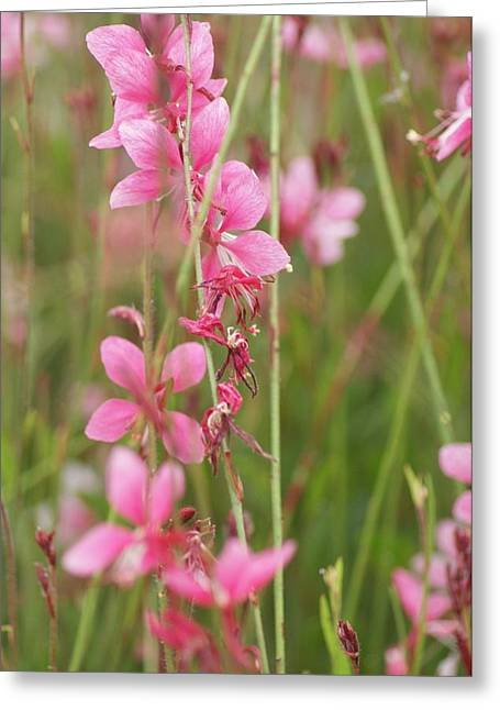 Pretty In Pink Greeting Card by Joe Bledsoe