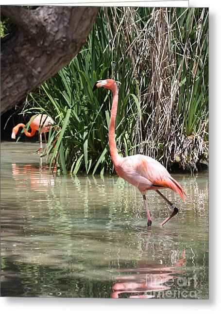 Greeting Card featuring the photograph Pretty In Pink by John Telfer