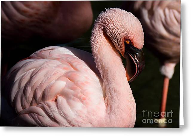 Pretty In Pink Greeting Card by Lisa L Silva