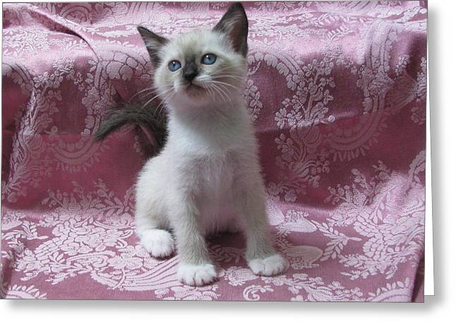 Kitten Pretty In Pink Paisley Greeting Card