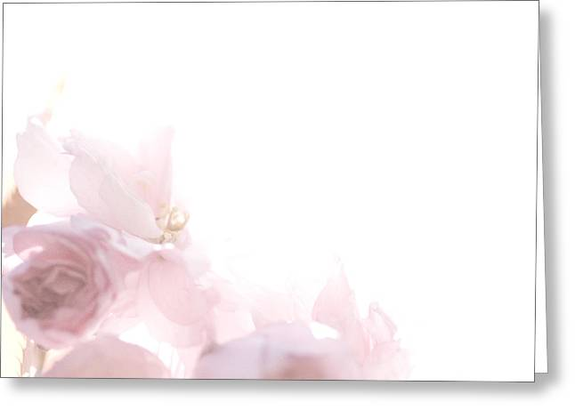 Pretty In Pink - The Dancer Greeting Card