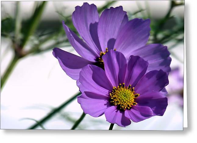 Greeting Card featuring the photograph Pretty In Purple by Janice Drew