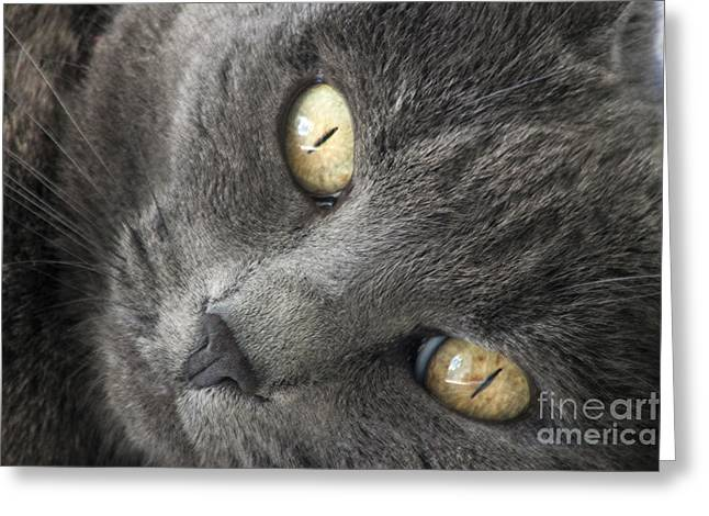 Pretty Kitty Eyes Greeting Card by Darleen Stry