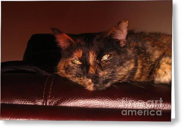 Greeting Card featuring the photograph Pretty Kitty by Oksana Semenchenko