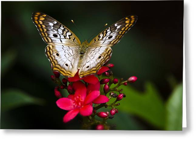 Pretty Little Butterfly  Greeting Card by Saija  Lehtonen
