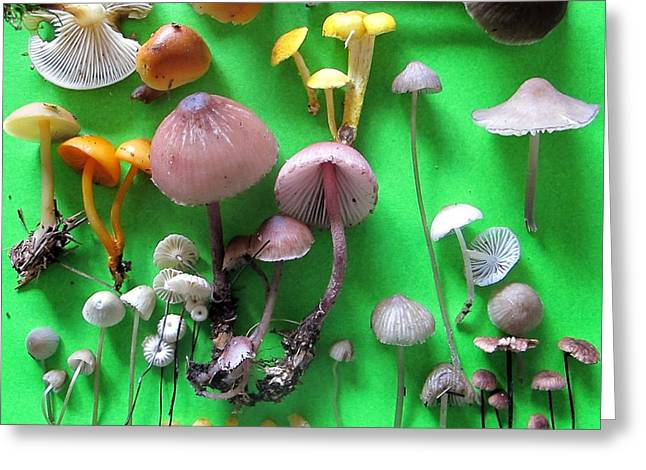 Pretty Little Mushrooms Greeting Card by Timothy Myles
