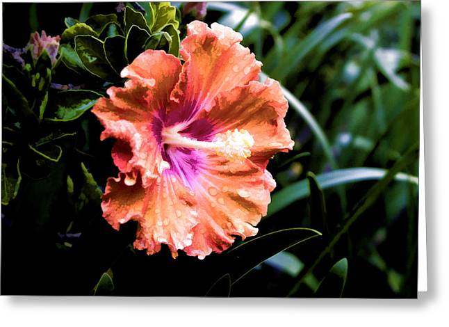 Greeting Card featuring the digital art Pretty Orange Hibiscus by Photographic Art by Russel Ray Photos