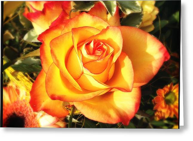 Pretty Orange Rose Greeting Card