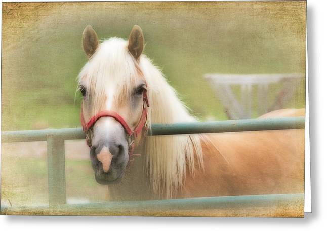 Pretty Palomino Horse Photography Greeting Card by Eleanor Abramson