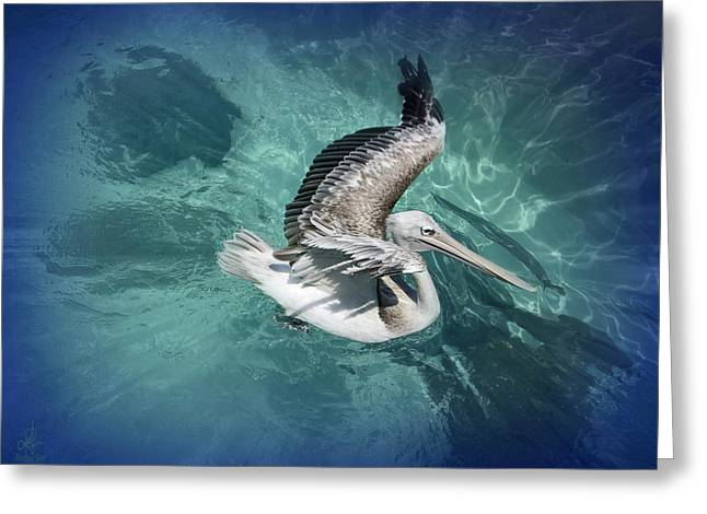 Greeting Card featuring the photograph Pretty Pelican by Pennie  McCracken