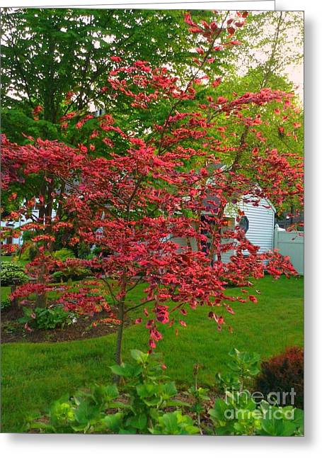 Greeting Card featuring the photograph Pretty Pink Beech Tree by Becky Lupe