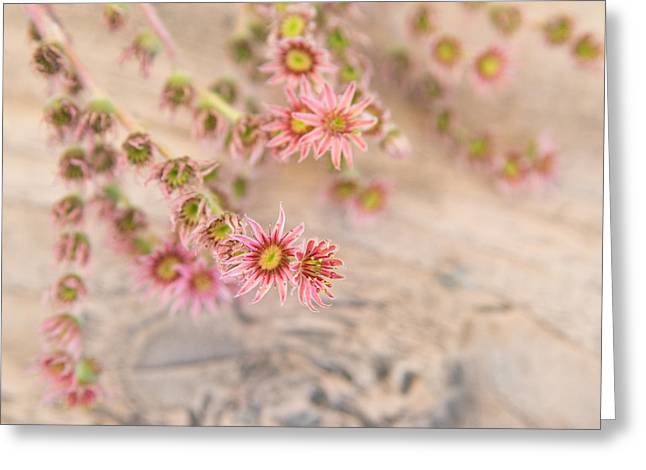 Pretty Pink Flowers Greeting Card by Matthias Hauser