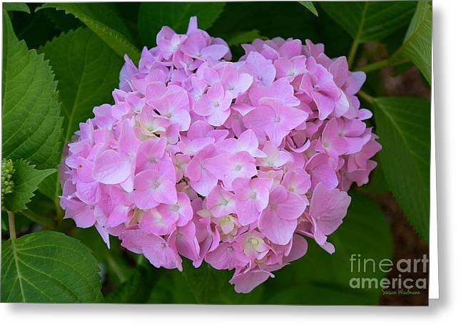Pretty Pink Hydrangea Greeting Card by Susan Wiedmann