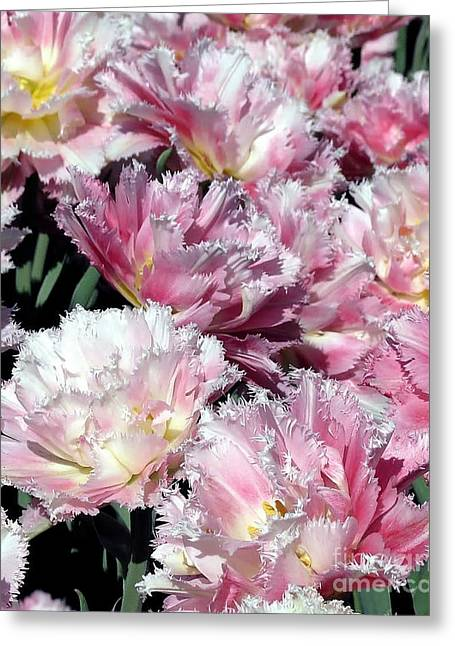 Pretty Pink Petal Greeting Card