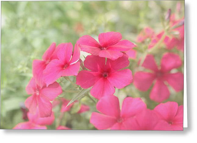 Pretty Pink Posies Greeting Card