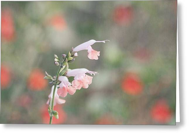 Pretty Pink Salvia Greeting Card
